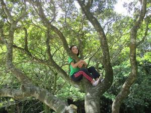 木の上はすずしいな。コアラになった気分。